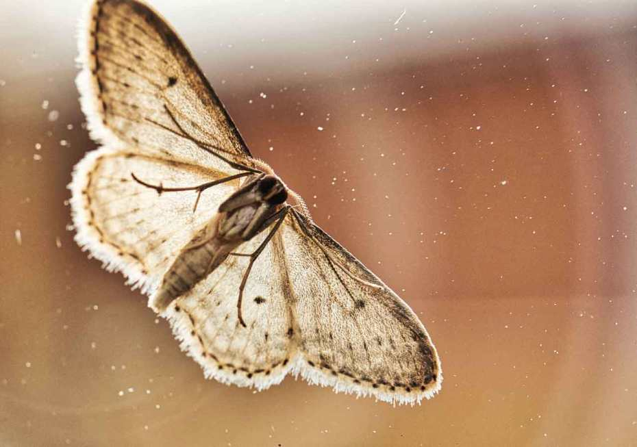 Codling moths are among the most common fruit pests.