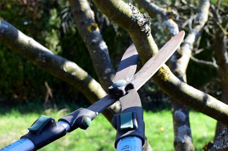 Pruning a fruit tree by hand in the daytime.