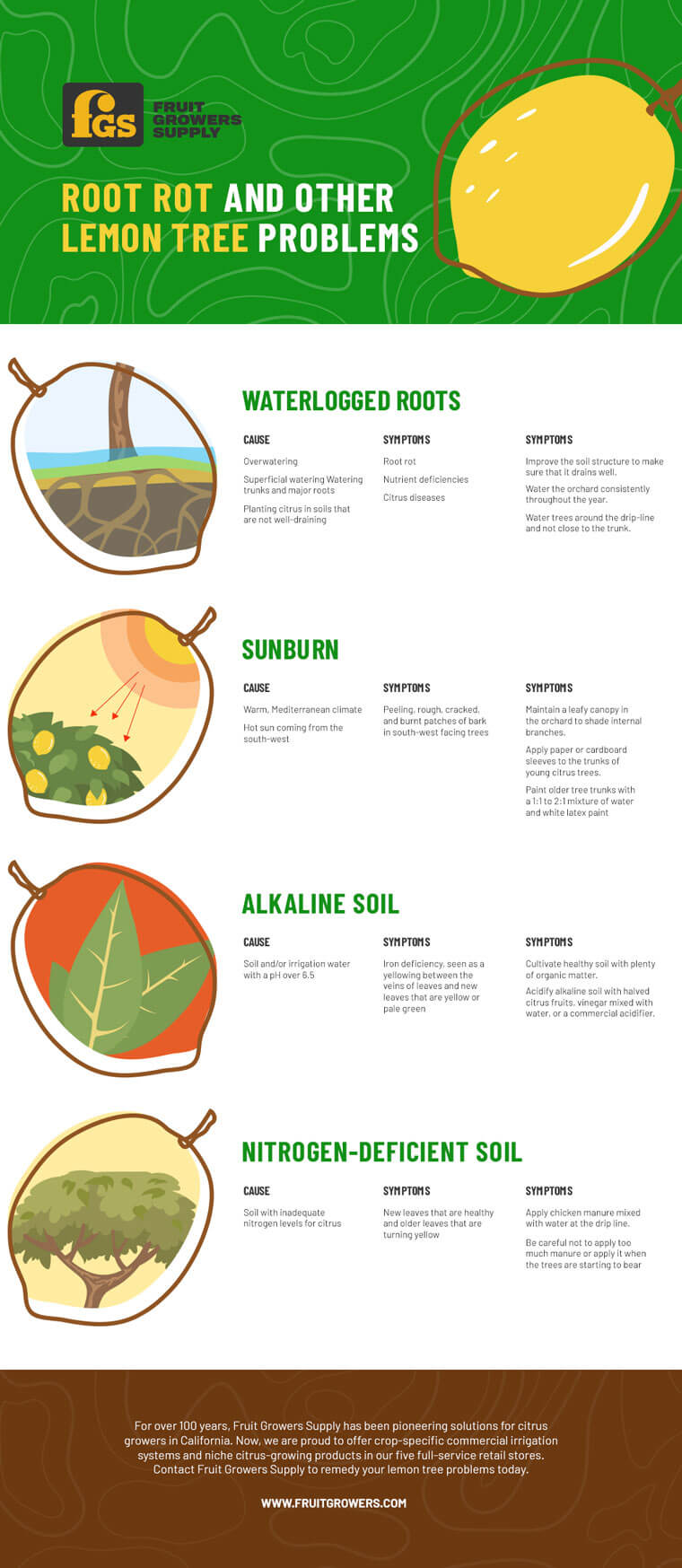 Root Rot and other Lemon tree Problems - Infographic