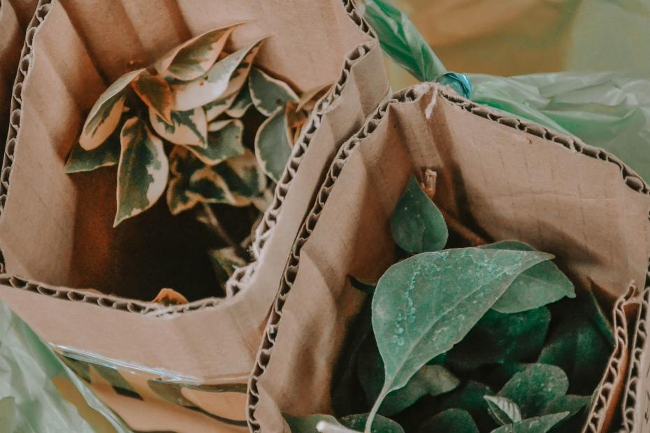 Photo of plants in corrugated boxes