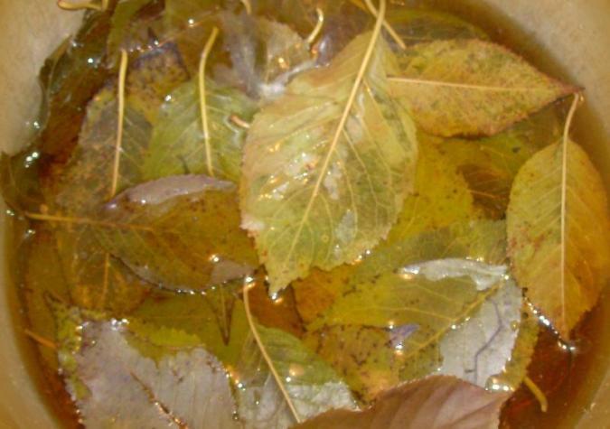 Сироп из черноплодной рябины с вишневыми листьями обладает изысканным вкусом