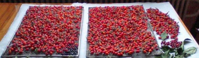 Помещение, где сушатся ягоды должно проветриваться
