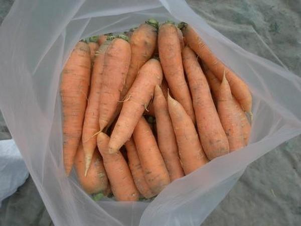 В пакетах морковь так же может храниться продолжительное время