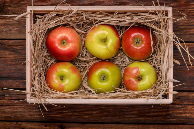 Укладка яблок в один слой на хранение в ящиках