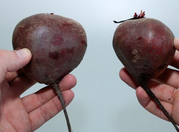 При выборе свеклы отдавать предпочтение лучше плодам средних размеров