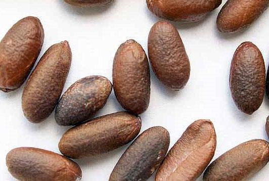 Семена хурмы без внешних дефектов