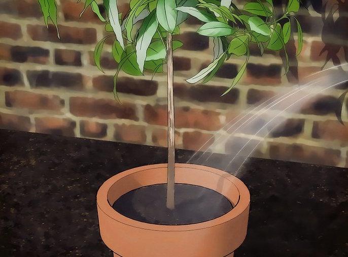 Следует помнить, что чрезмерный полив растение тоже не любит
