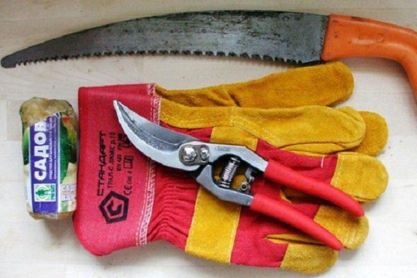 Вещи для обрезки крыжовника