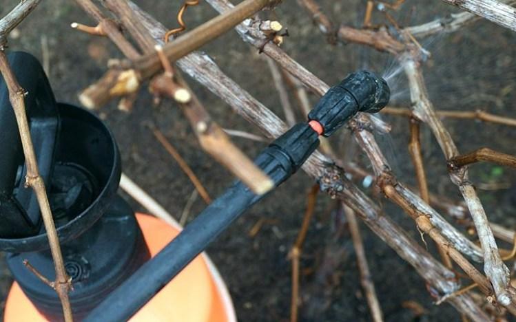 Виноград обработка весной от болезней и вредителей