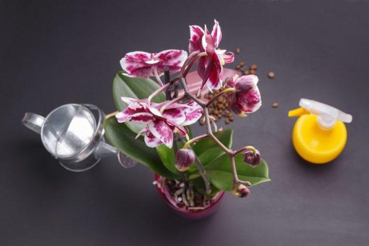 Стимулирование орхидеи к цветению
