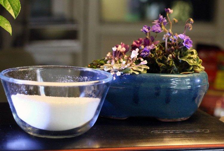 Янтарная кислота для цветов