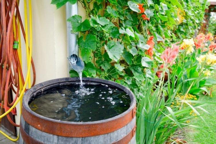 как часто поливать огурцы в открытом грунте