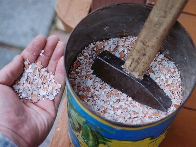 Чем подкормить перец для роста в открытом грунте