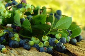 Blueberry fruit facts