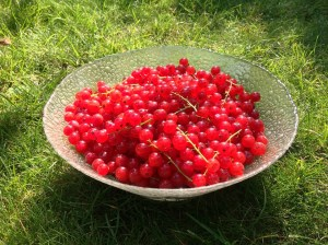 Currants Fruit Facts