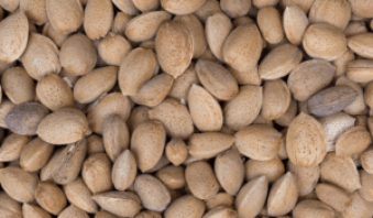 Almond dry fruit facts