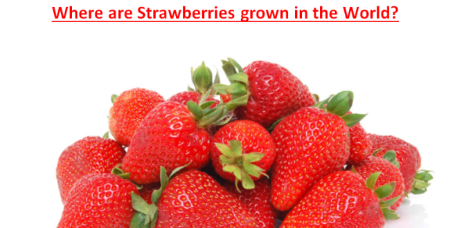 Where are Strawberries grown in the World?