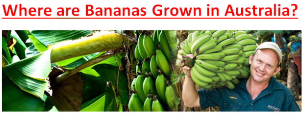 Where are Bananas Grown in Australia??