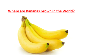 Where are Bananas Grown in the World?