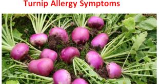 Turnip Allergy Symptoms