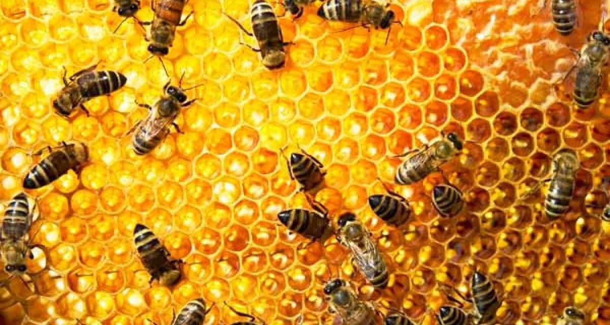 A méhek mintegy negyede hullott el Békésben a télen