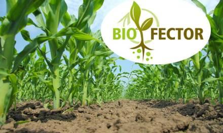 Bioeffektív készítmények az organikus  mezőgazdasági gyakorlatban