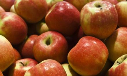 Nem lesz 700-800 Ft az alma ára a boltokban…