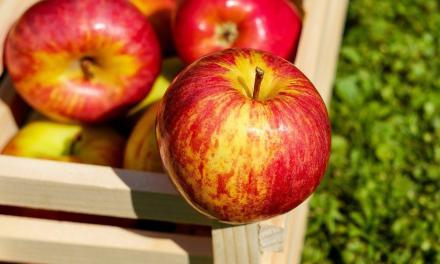 A hazai almát népszerűsítik
