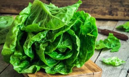 Ezt kell tudni a fejes saláta hajtatásáról