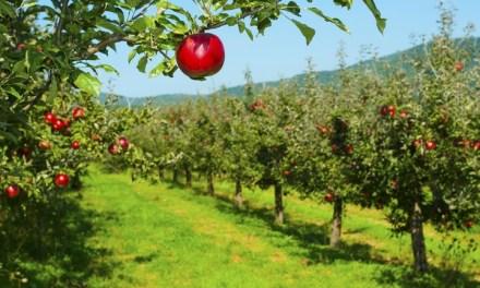 Gyümölcsöseink növényvédelme – Fogyatkozó hatóanyagok vs. jövőbeni lehetőségek