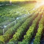 A FruitVeB Magyar Zöldség-Gyümölcs Szakmaközi Szervezet és Terméktanács kérelmezésére a Minisztérium az idei évben meghosszabbította az öntözési igényt