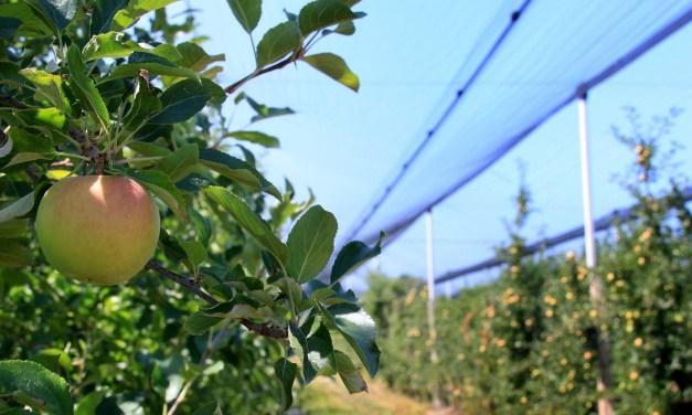 91/2012. (VIII. 29.) VM rendelet a szőlő- és gyümölcsös ültetvények műveléséhez nyújtott csekély összegű (de minimis) támogatásról