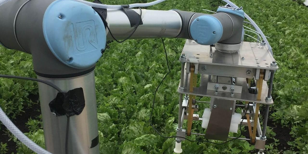 Így tanítják salátaszedésre az első robotot