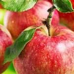 Ezzel az applikációval növelhető az alma terméshozama