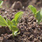 Több mint 670 millió forint zöldségek nemesítésére