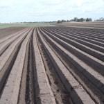 Beszámoló – Gyökérzöldségek termesztése szakmai nap
