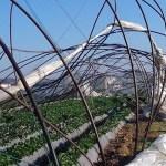A kertészeteket sem kímélték a februári szélviharok