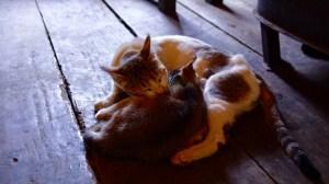 ブータン ネコ 昼寝
