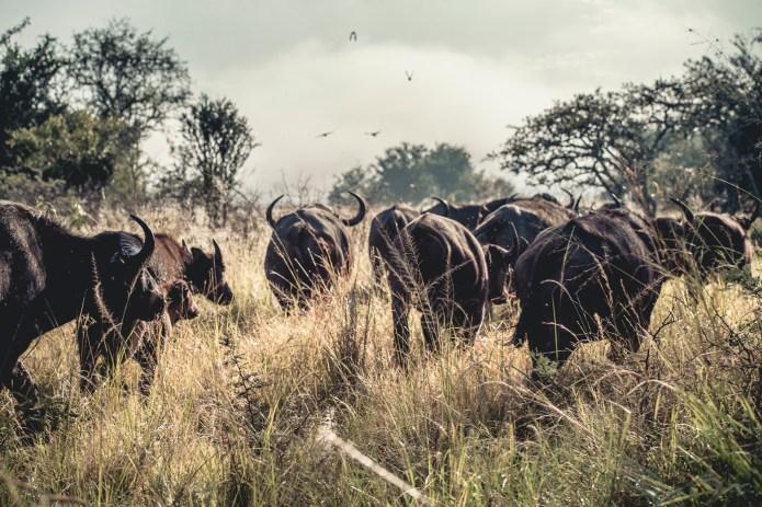 Travel Rwanda 2015_small-772