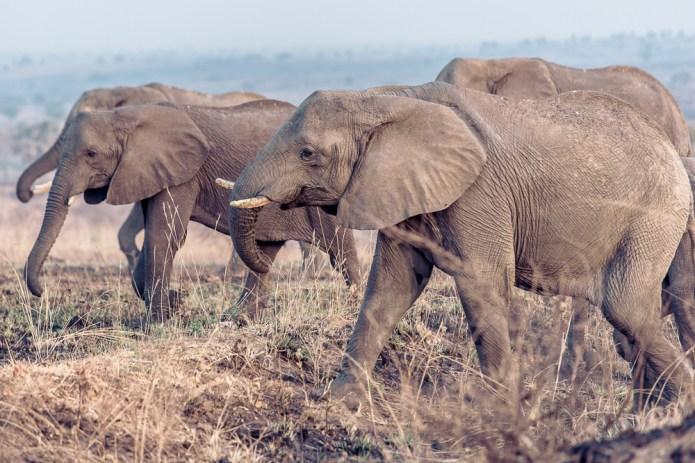 Travel Rwanda_Uganda_small-2229