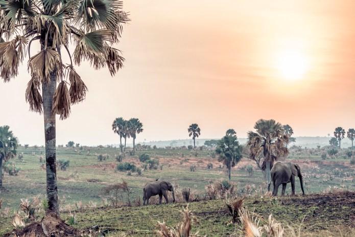 Travel Rwanda_Uganda_small-2236