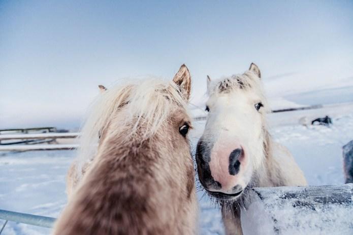 icelandfrumoltphotography2015138