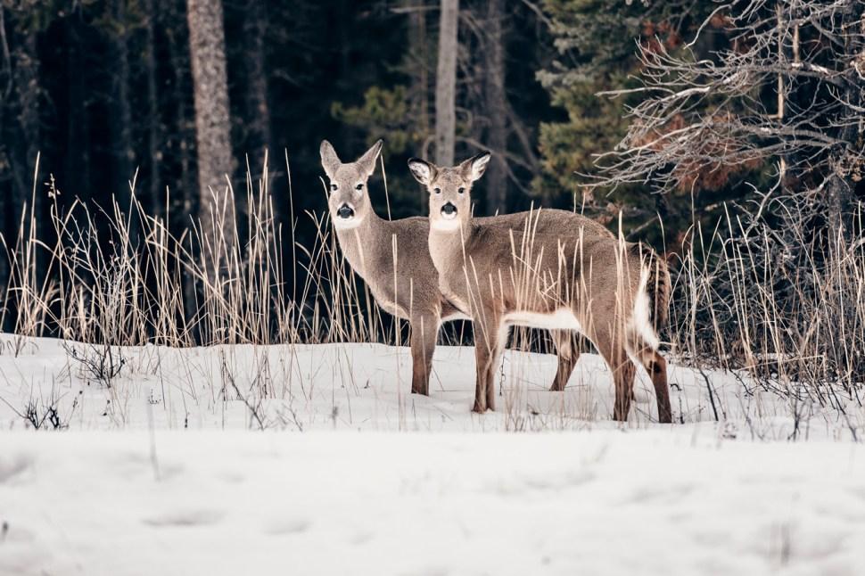 icefields-parkway-christian-frumolt-fotografie_web_small-61