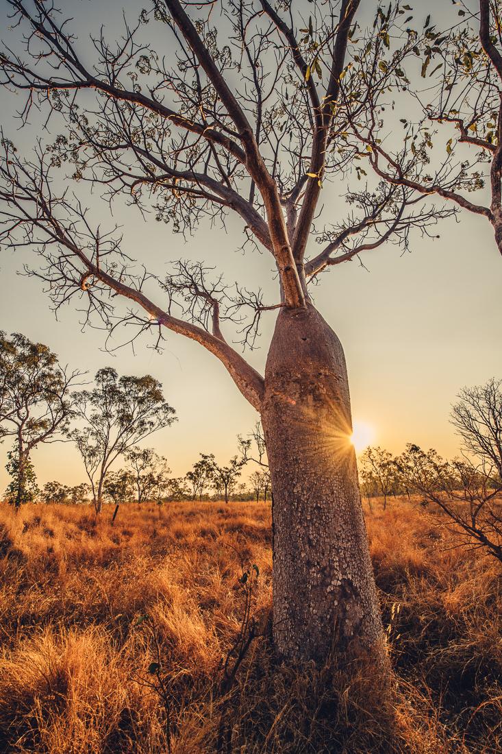 australiennordwestenblogfrumolt2018-109