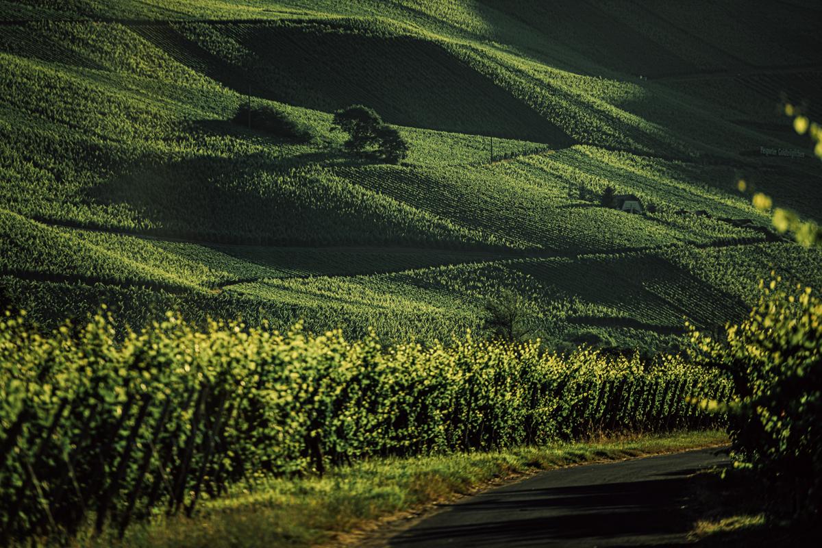 German Wine Tour frumolt photography small size-120