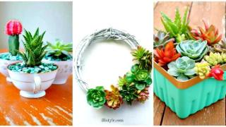 DIY Succulent Projects – 60 Ways to Display Succulents in Your Home