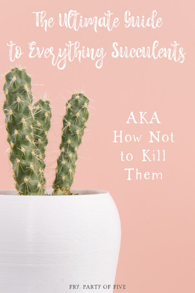 The Ultimate Guide to Everything Succulents