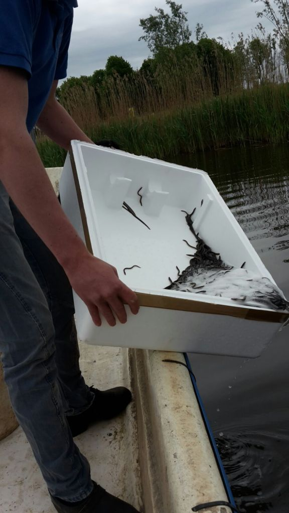 Aaltjes te water laten in Noord Friesland