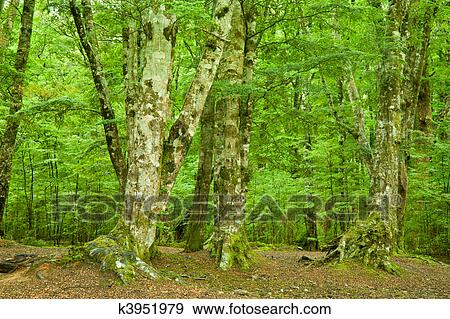 Dense Rainforest Stock Photo | k3951979 | Fotosearch