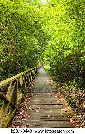 Boardwalk in dense rainforest Stock Image | k28779443 | Fotosearch